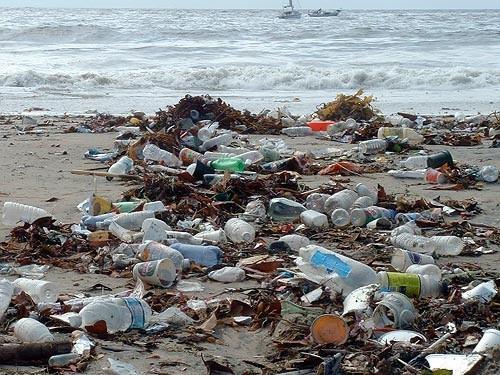 Bouteilles en plastique et pollution : un fléau environnemental