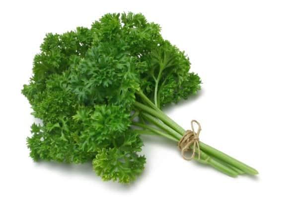 Plastique végétal à base de persil