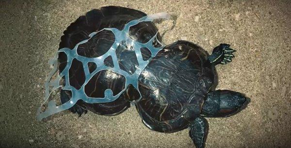 Les emballages plastiques et les graves conséquences sur la faune marine