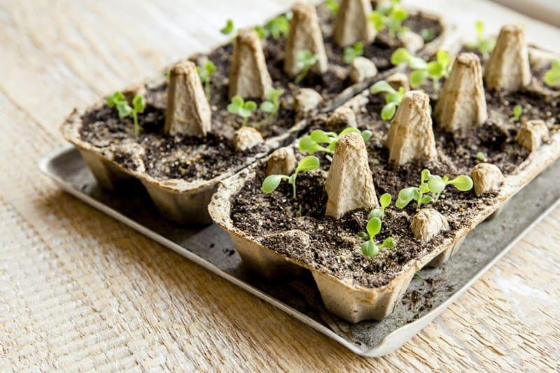 Boîte à œufs réutilisable pour le semis - jardin.