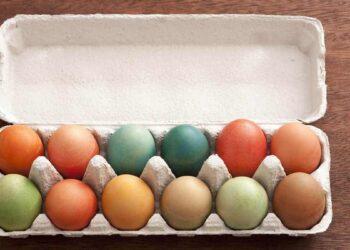 Boîte à œufs réutilisable, cellulose ou plastique ?
